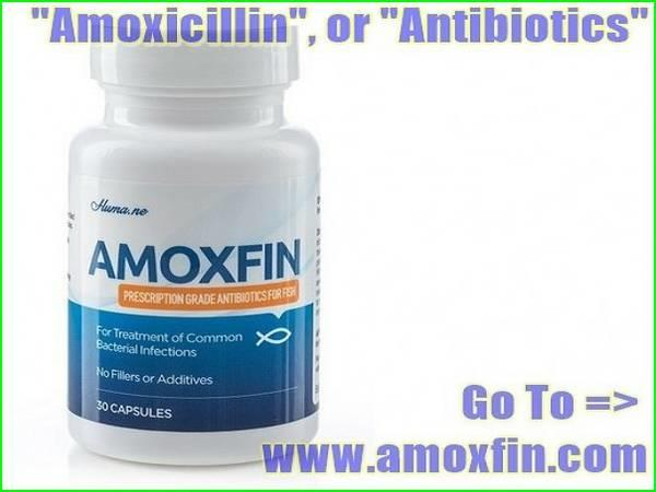 Amoxicillin or antibiotics need to see a doctor about for Fish antibiotics for humans
